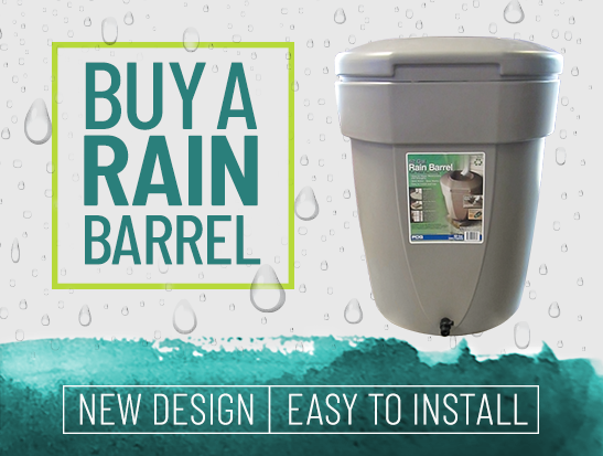 buy a rain barrel