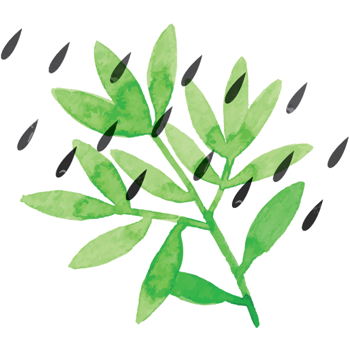 plant with rain drops